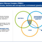 Concurrent infections of PRRS and Glässer's disease in nurseries: How to approach the vaccination?