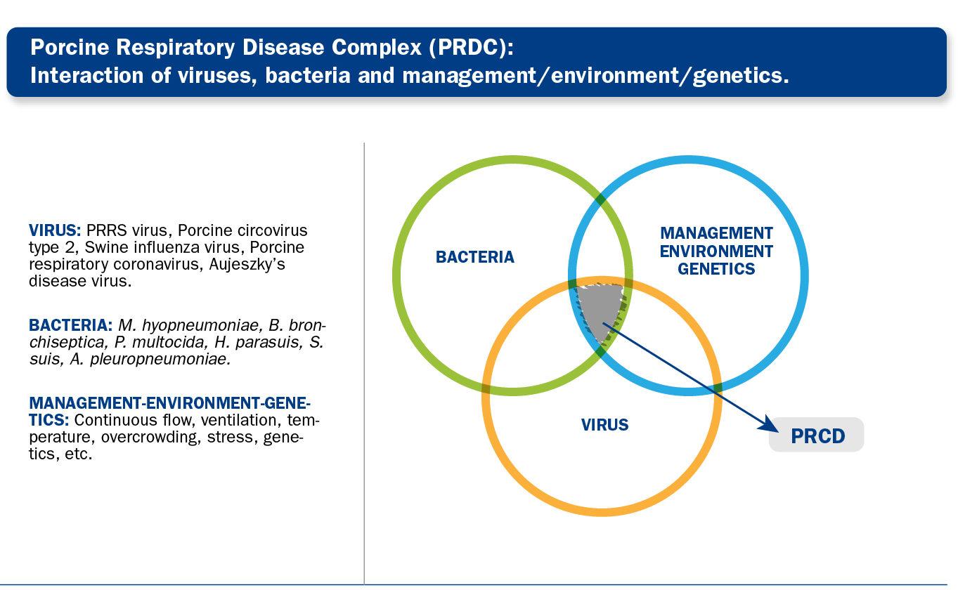 Porcine Respiratory Disease: PRRS vaccination
