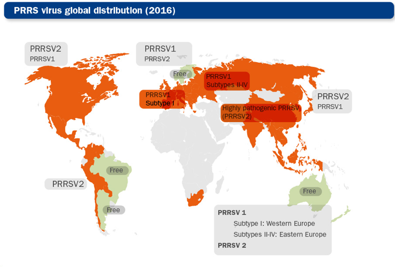 PRRS virus global distribution map (PRRSV1 and PRRSV2 strains)