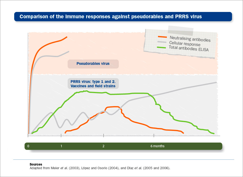PRRS vaccines: increase in humoral immunity is triggered