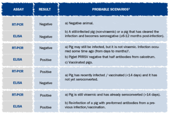 PRRSv infection in a boar stud in Mexico, how to manage it in terms of management and diagnostic?